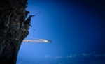 trumpet crane