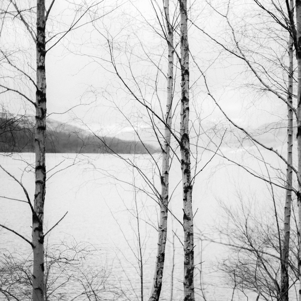 trees at f1.4