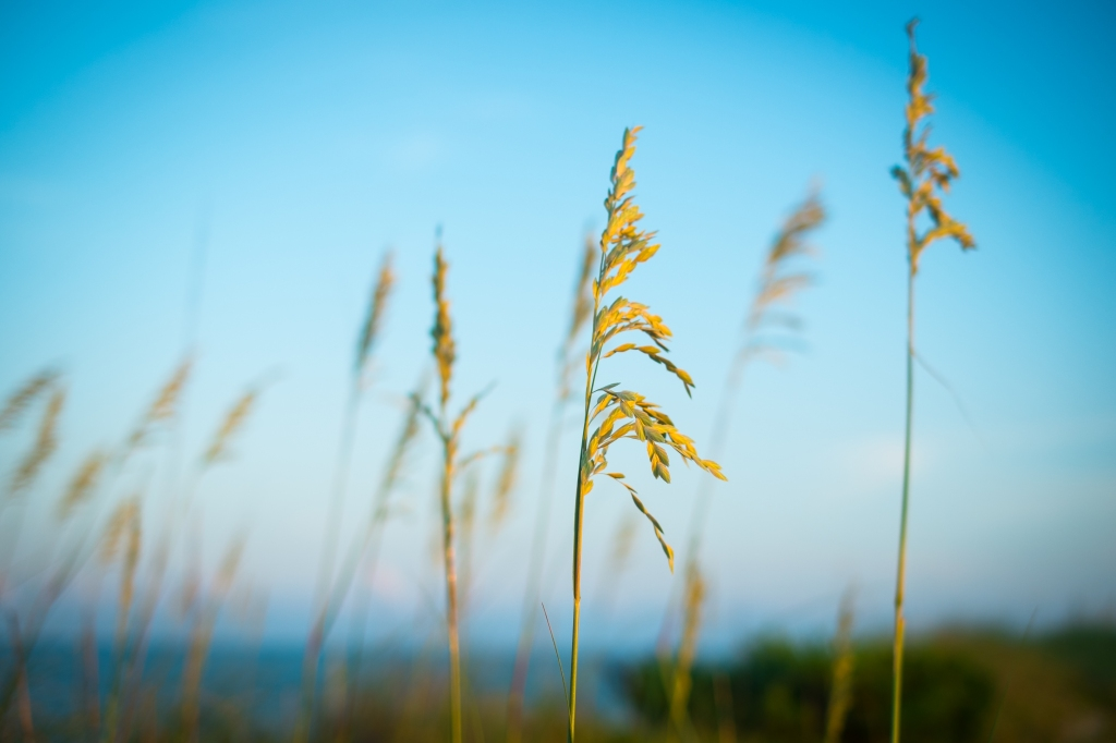 seashore flora